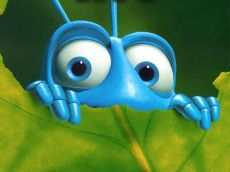 Bugs Rock